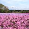 ピンクの裾野