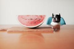 犬とスイカと夏