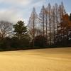 黄金の芝生