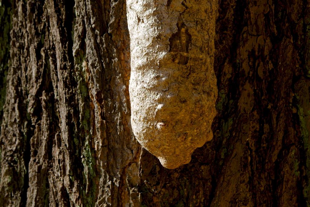 外苑銀杏並木の乳根 その1