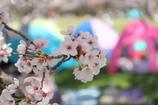 お花見日和 Ⅱ