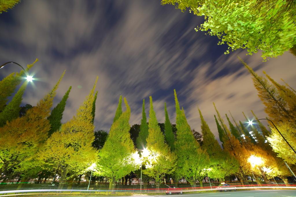 銀杏並木の幻