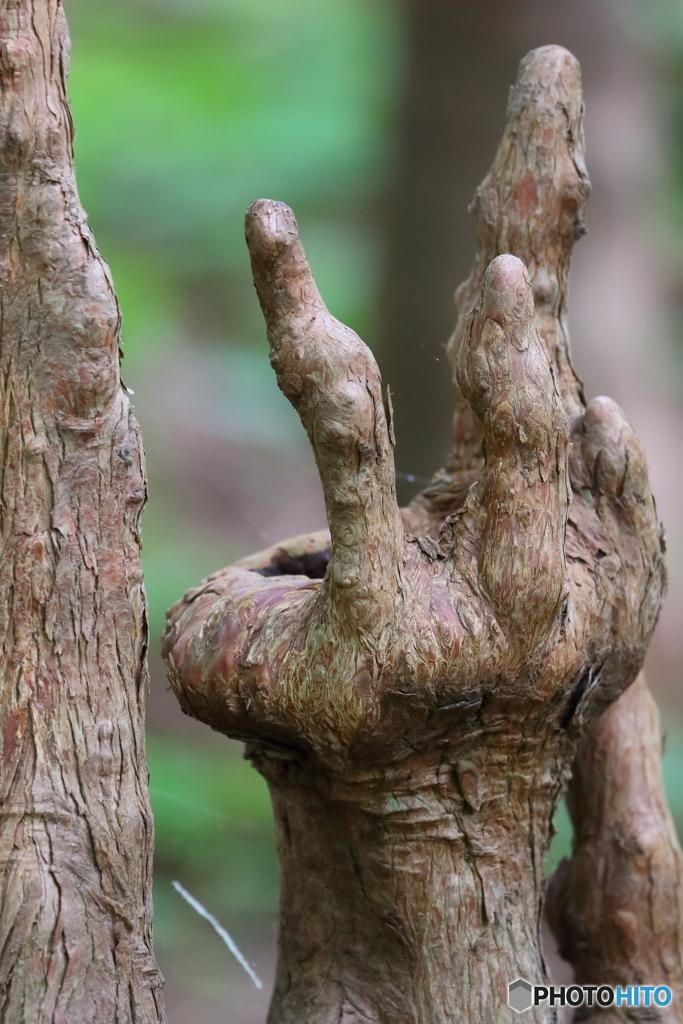 木霊の手 Ⅱ