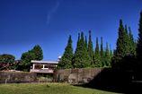 石垣と新緑の銀杏並木