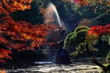 晩秋、鶴の舞 Ⅲ
