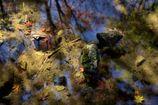 水中の秋色