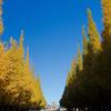 絵画館と銀杏並木