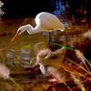 晩秋と白鷺 Ⅳ