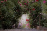 The gate to a tunnel with ♪Rhododendron♪