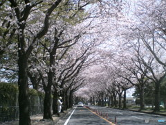 トイデジで桜