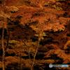 山中湖 夕焼けの渚紅葉まつり