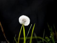 鮮やかな花の如く