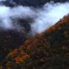 庄川峡の紅葉