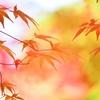秋に溶けながら・・