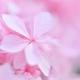 ピンク色の恋