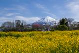 春富士の景