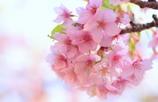 春のミラーボール