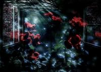 PENTAX PENTAX K-5で撮影した(愛の水中花)の写真(画像)