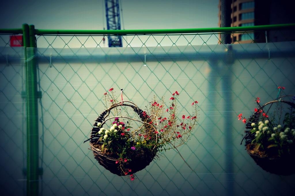 工事中の花