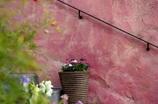 鉢植えのある外階段