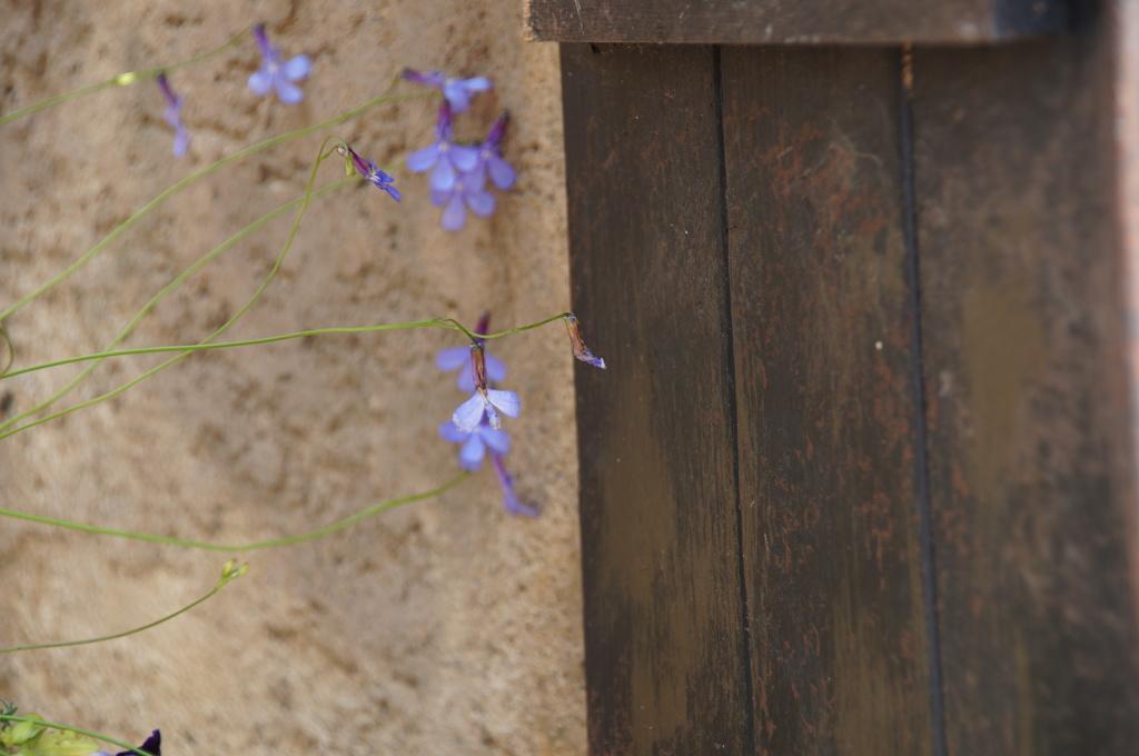 青い小さな花