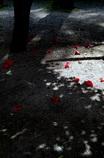 冬の花の終わり