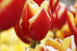 春のビタミン