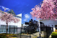 SLとしだれ桜