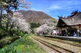 茅葺屋根の駅と桜
