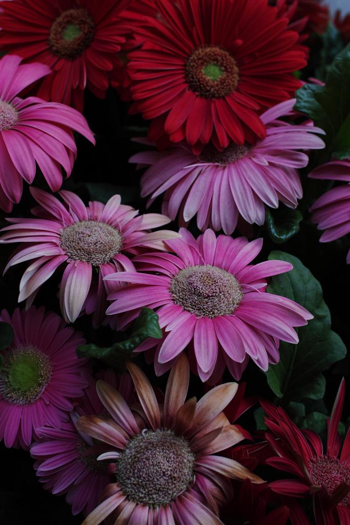 花~色いろ