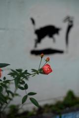 情熱の赤い薔薇♪