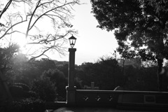 暮れなずむ外人墓地