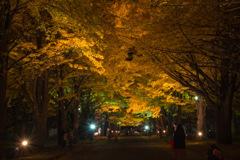 夜の並木道