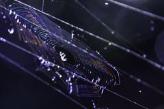 光彩「蜘蛛の糸」