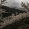奥千本「吉野山」