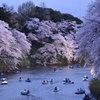 _夜桜「千鳥ヶ淵」