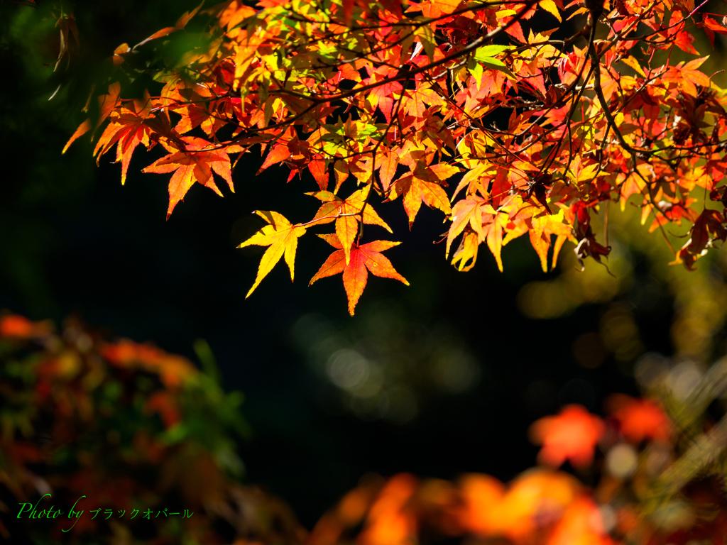 庭園の秋..(その2)