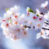 陽春のキラメキ..