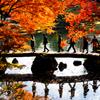 六義園 〜紅葉の渡月橋〜