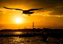 夕陽に翔ぶ..