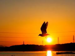 夕日を蹴って翔る..