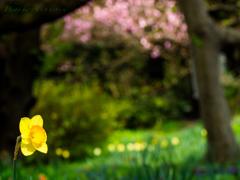 春高らかに..♪(その2)
