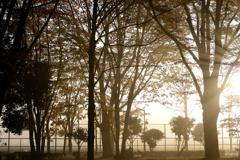 グラウンドの朝