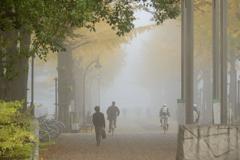霧中の銀杏通り
