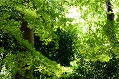 新緑を揺らす風