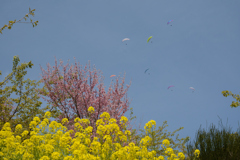 春の空にとぶ