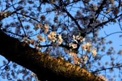 春の日の始まり