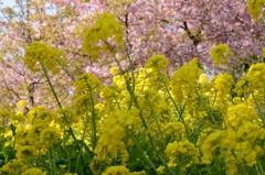 春の風が吹く