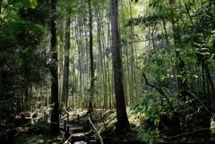 竹林のある庭