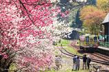 花桃が咲く時